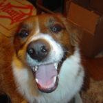 Dewey The Wonder Dog