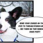 """Boomer says """"snow dogs, snow dogs, GO GO GO!"""""""