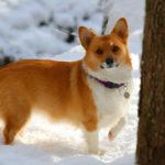 Snow Dogs Sunday