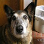 In Memoriam:  Bogey's Story
