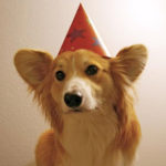 The Daily Corgi's going on a birthday break …