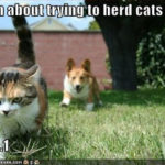 Cat herding?  Not so fast …