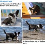 Puppy Postcard!