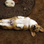 Belly Cam:  Alfie!