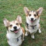 Saturday Smilers:  Blake and Callie!