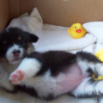 Puppy Cam:  Kirra!