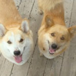 Adoptable:  Sparky and Foxy in Dumont, Colorado