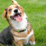 SMILE CAM:  Cooper Bean!