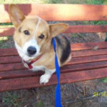 Adoptable Pem in Milton, Florida:  Cooper!