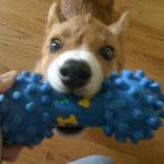 Puppy Cam:  Dexter!