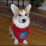 September 11th, Sudbury MA:  meet Katie Bear and learn about therapy dogs!