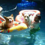 Pool Cam:  Yogi and pals!