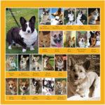 First look — The Daily Corgi 2011 Calendar!