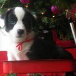 CASTING CALL — CHRISTMAS PHOTOS!