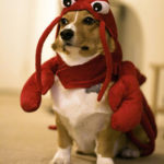 Lobster Corgi for CorgiAid!