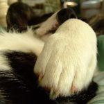 Talk to the paw …