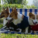 Saturday Pet Blogger Hop!