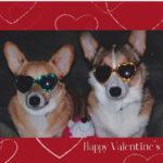 Valentine's Cam:  Brodie & Hudson!