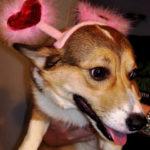 Be-My-Valentine Cam!
