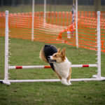 Sunday Special Feature:  Agility 101