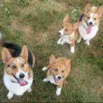 Zubie, Crash, Lily & Marshall of Virginia