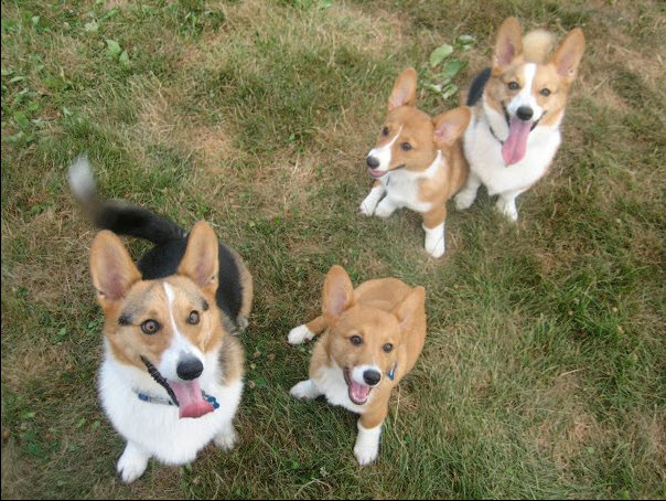 Zubie, Crash, Lily & Marshall of Virginia