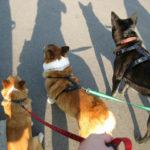Trail Cam:  Bodi, Buddy and Freckles!
