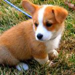 Puppy Cam:  Gryff!