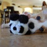 Puppy Cam!