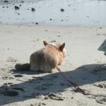 Beach Bum:  Quinny!