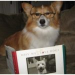 We always knew Corgis were smart …