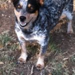 Rescue Cam:  Noni in Texas looking for a home – UPDATE!