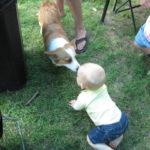 Kids n' Corgis Cam:  Pocket!