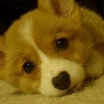 Puppy Cam:  Violet!