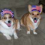 Brodie and Hudson, Corgis in arms …