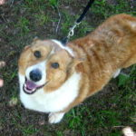 Yogi Boo of South Carolina:  Short, red, handsome and available!
