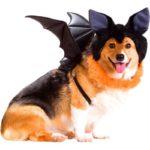 Bat Corgi!