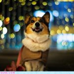 Pochiko :: Big City, Bright Lights!