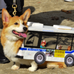 Corgi Bus for the Win!