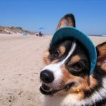 The Daily Corgi nets a nod on CNN!