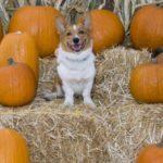 Got pumpkin pics?