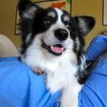 Puppy Cam:  Pudge derPoopster!