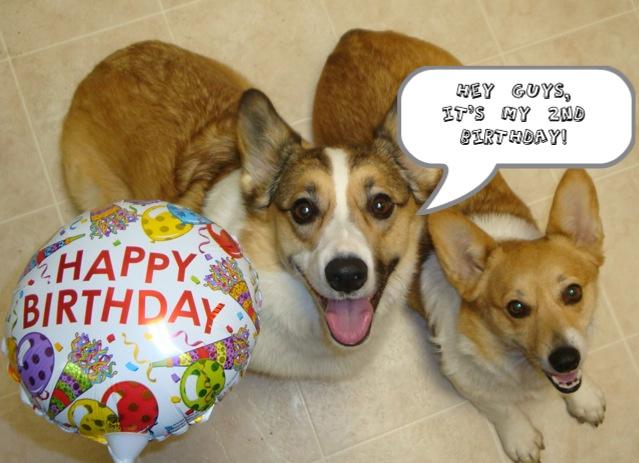 corgi happy birthday Happy Birthday Tank!   The Daily Corgi corgi happy birthday