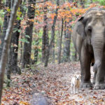 The elephant and the dog.