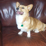 Helping Paws Opportunity:  Zoie's fund makes GOAL!!!