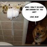 Remodel Cam:  Blue!