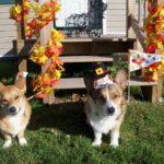 Brodie & Hudson Talk Turkey!
