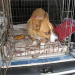 Rescue Spotlight:  Cady of Kansas