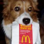 Cheeseburger Cam:  Magic!
