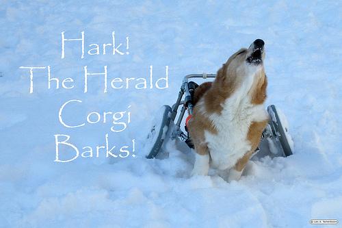 Guido's barOoOoOoo-tiful holiday hark!